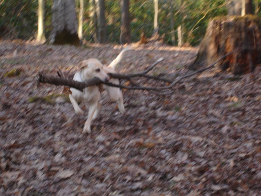 Macy_Rae_Dragging_Firewood_to_Camp_for_me_!.jpg
